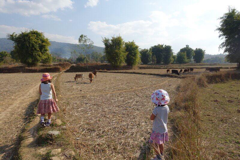 eatdrinklaos-xiang-khouang-plain-jars-cows