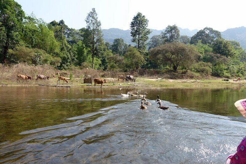 eatdrinklaos-travel-konglor-caves-ducks-farming