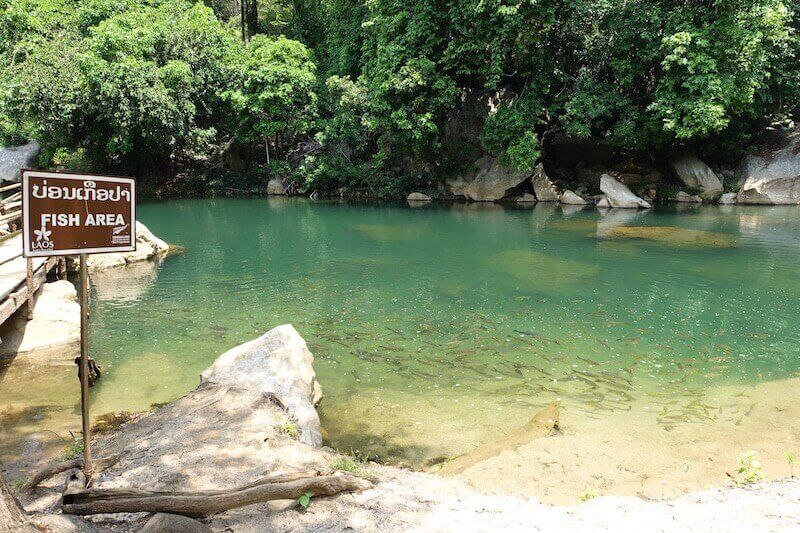 eatdrinklaos-travel-konglor-caves-fish-feeding
