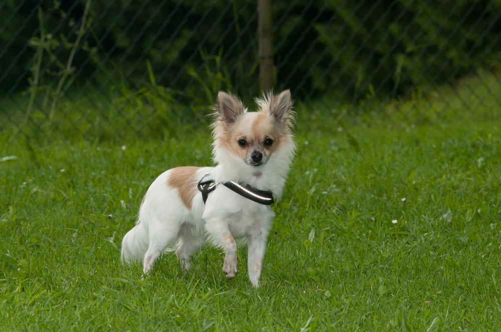 Kleinsthunde (49 von 144).jpg