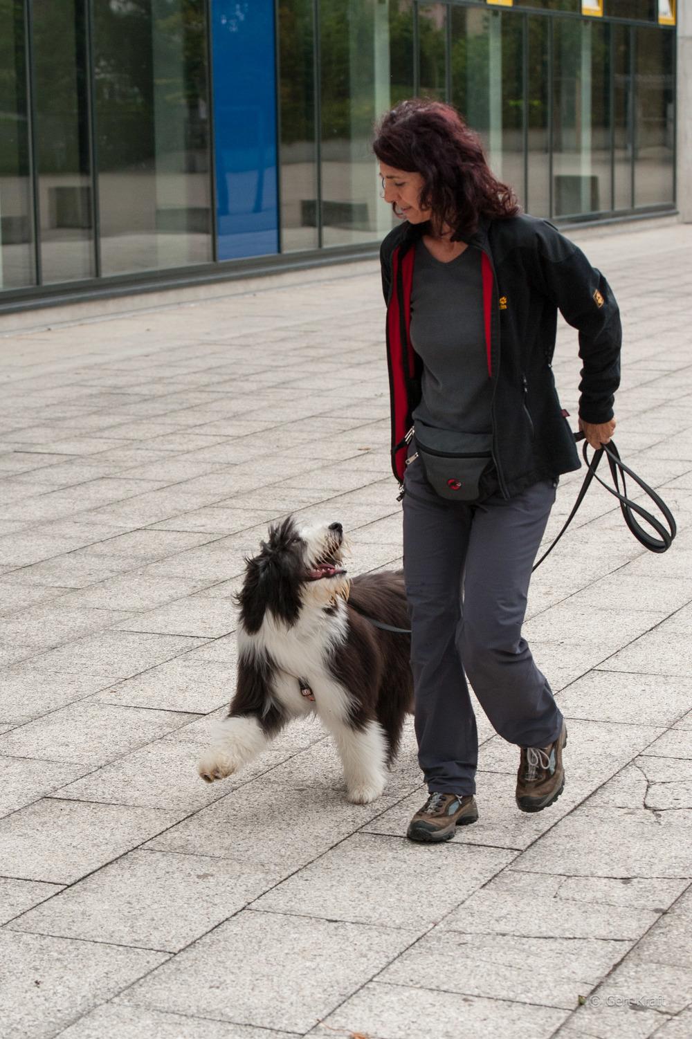 Junghund8 (1 von 1).jpg