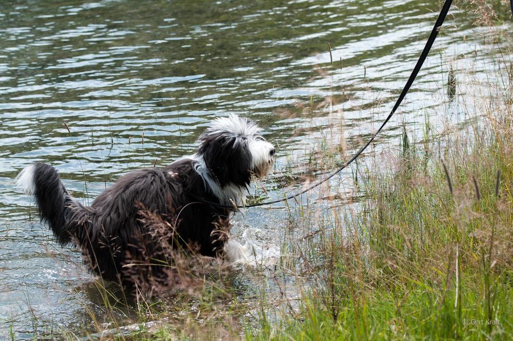 Junghund9 (1 von 1).jpg