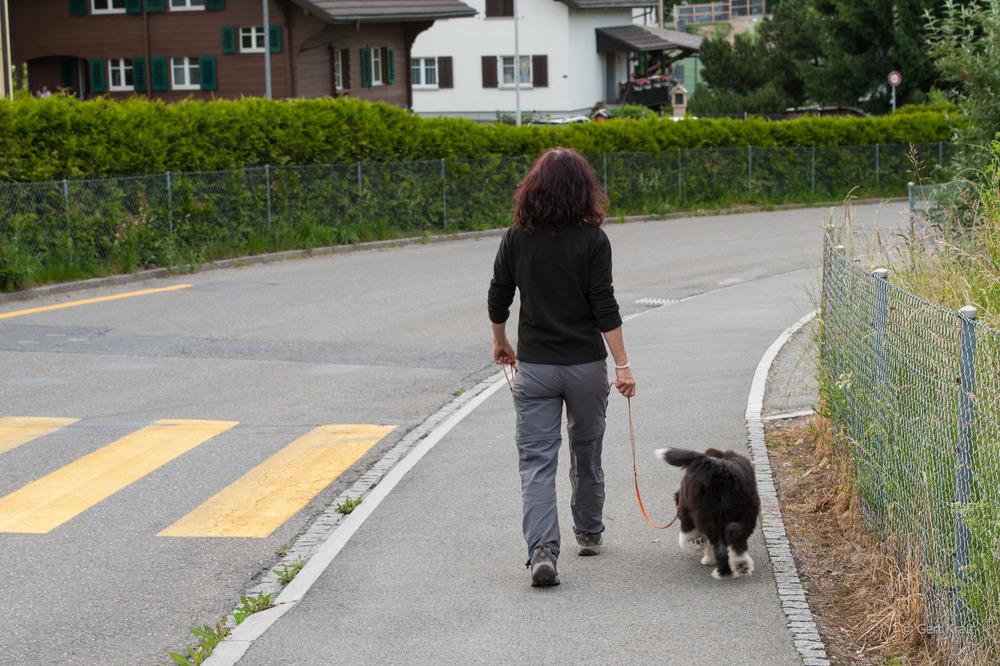 JunghundI (1 von 1).jpg
