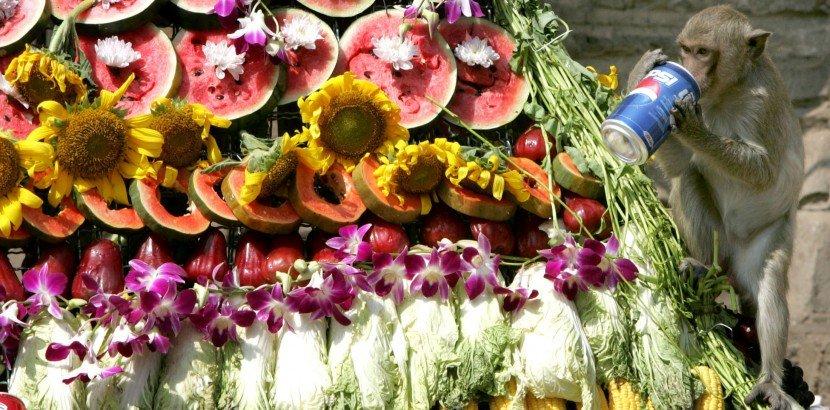 Tutto quello che dovrebbe sapere sul Festival delle scimmie di Lopburi