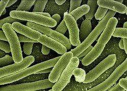 Image credit: Pixabay  An enhanced image of E. coli