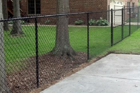 cl tree.jpg