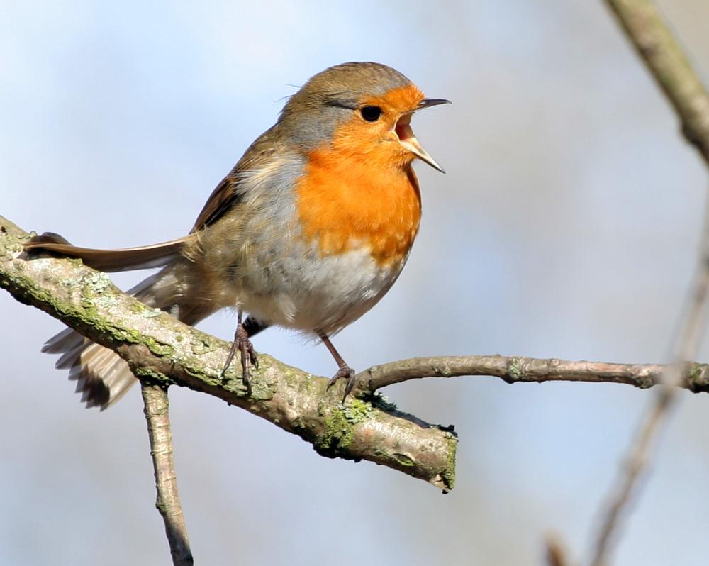 birdchirp.jpg