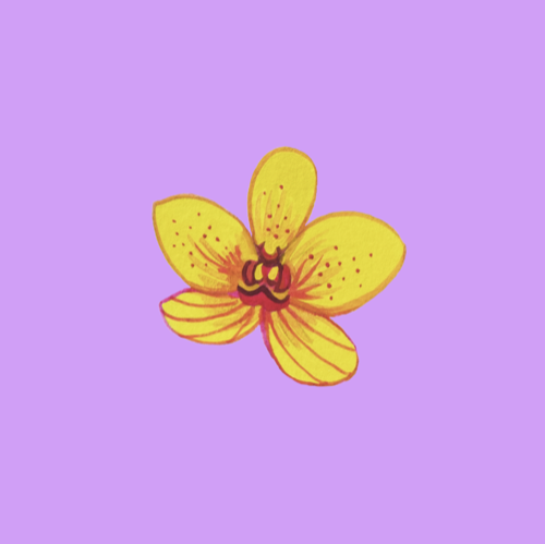 Yellow Orchid.png