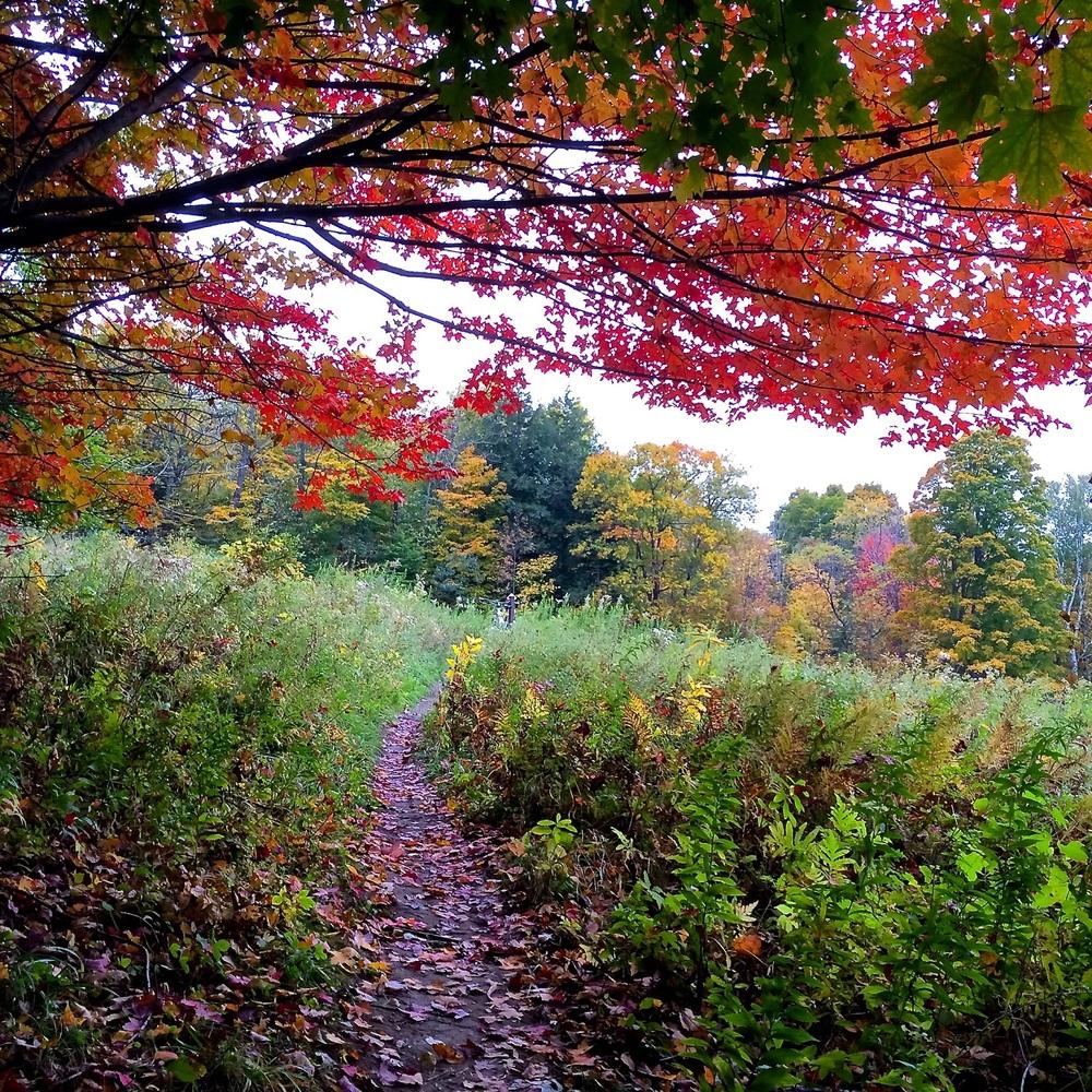 foliage_trees.jpg