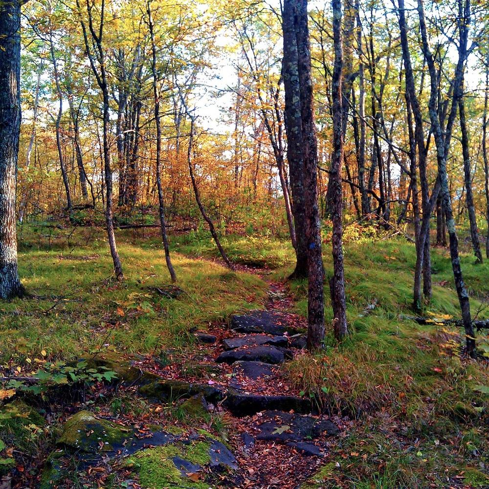 foliage_trail.jpg