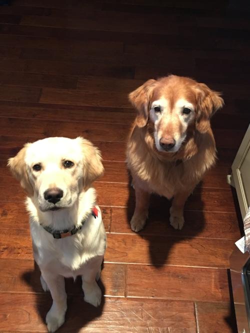 Hazel (L) & Lucy (r)