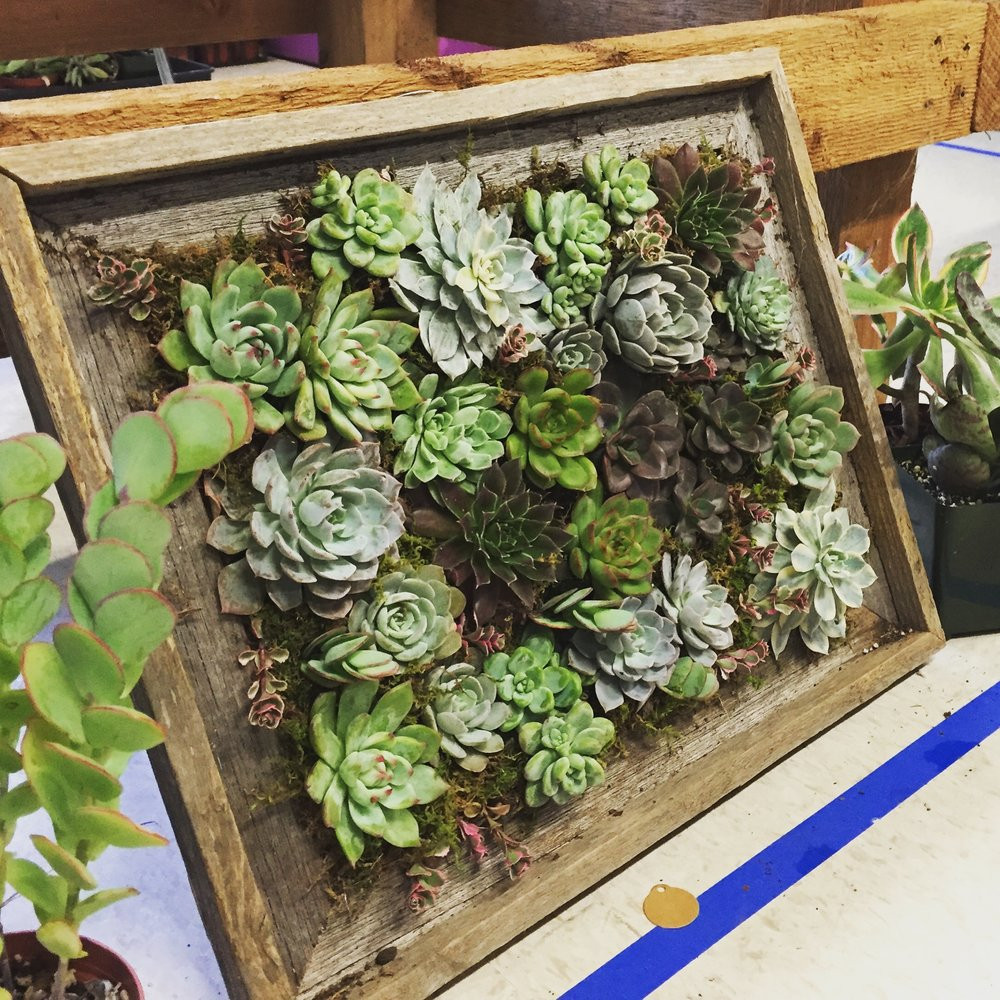 Botanical art edible landscapes dallas our best seller is the succulent picture frame we have standard sizes small medium and large we can also custom build a frame in a specific size for any jeuxipadfo Image collections