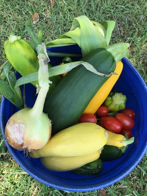 harvest 3.jpg
