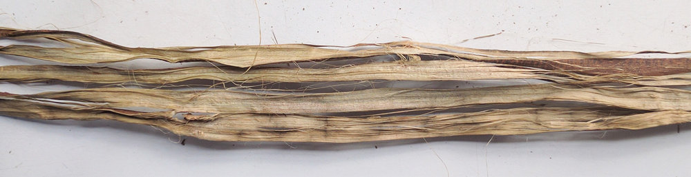 Close up of bark ribbon, fiber on the inside