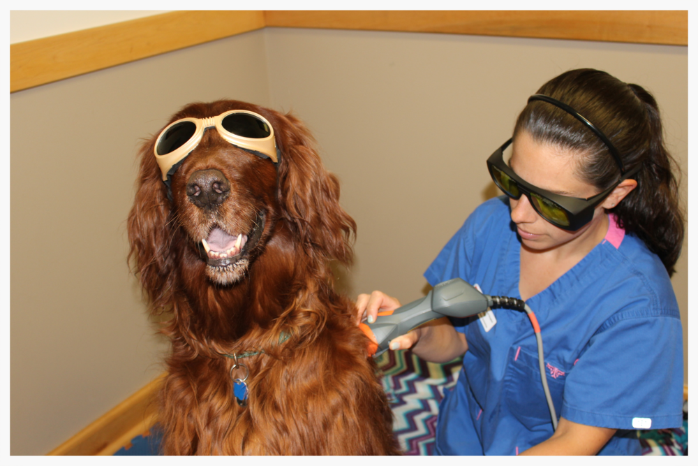 Murphy & Josette in a Laser Therapy Session at Mendon