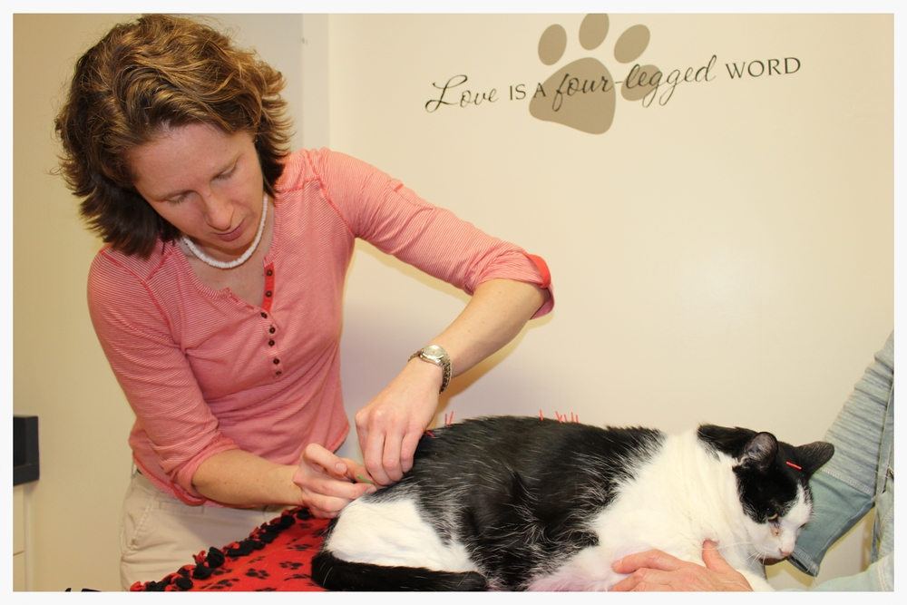 Rocky Receiving Acupuncture from Dr. Williamson