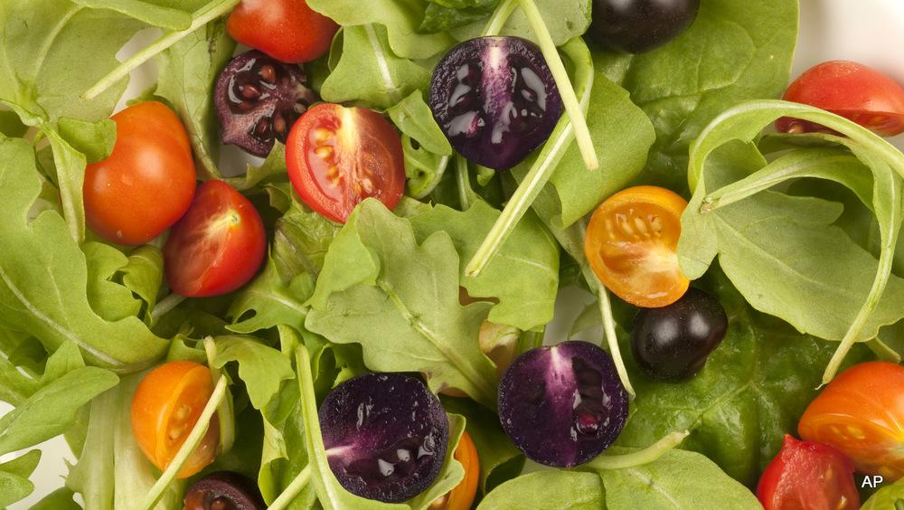 Genetically-modified tomato salad, John Innes Centre, UK.