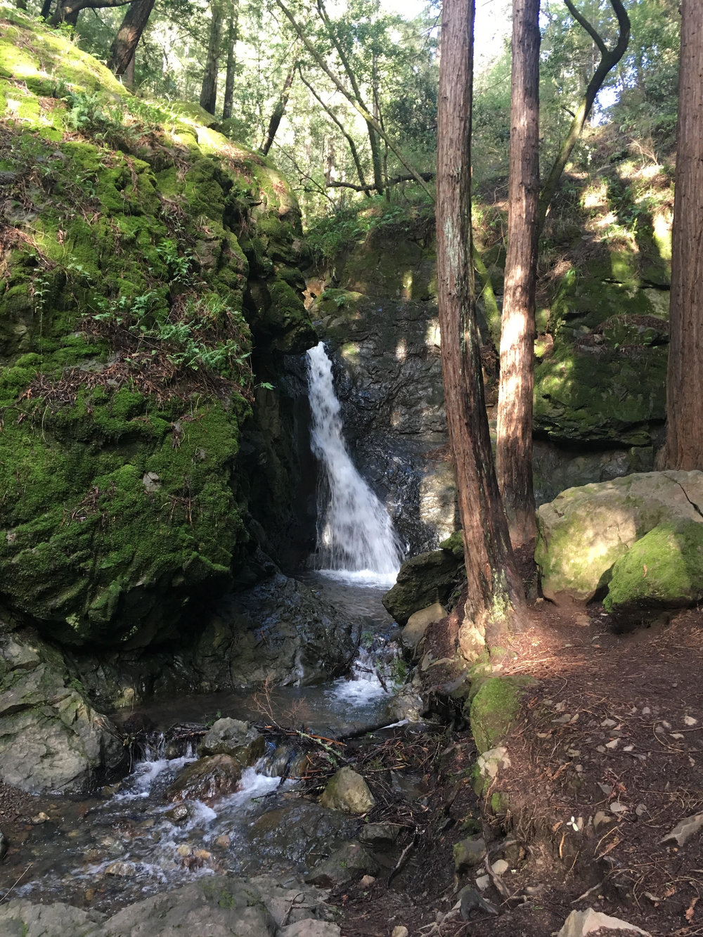 Cascade Falls in Mill Valley, California: a good place to go to not suffer.