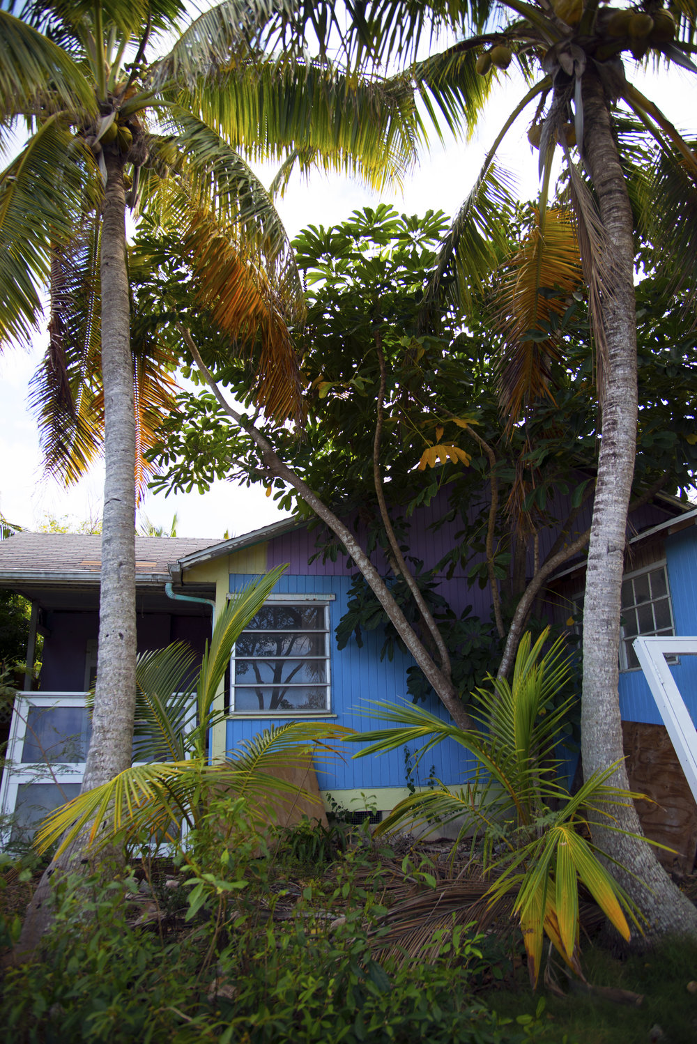 House in Woods in Bahamas.jpg