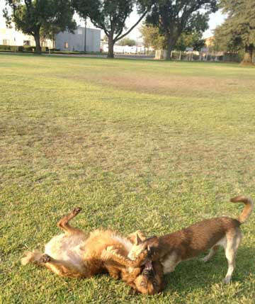 doggies-playing.jpg