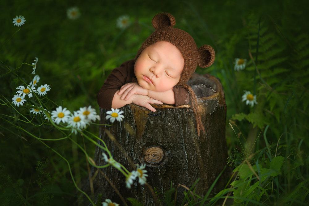 Baby Bear Cub - Natalie Buck Photography (1 of 1).jpg