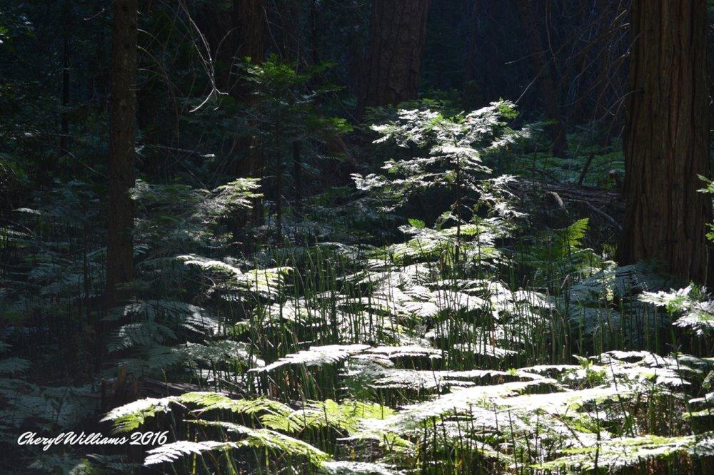 Trail to Mist Falls