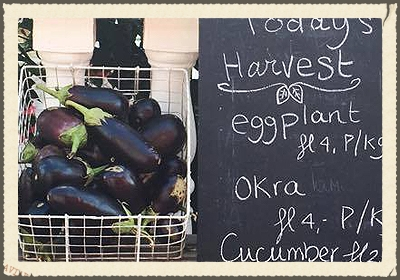 "HOFI CAS CORA  is a centrally located family farm with a ""farm to table"" brunch spot. Open only on Saturday and Sunday from 9-3. Our menu is a changing menu depending on the fruits and vegetables we have harvested. We will serve egg dishes, waffles, sandwiches, salads and baked goods.   https://www.facebook.com/hoficascora/timeline"