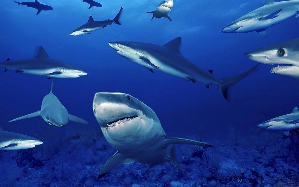 SC_Sharks-1920-1200.jpg
