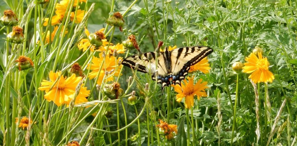 Butterfly with flowers.jpg