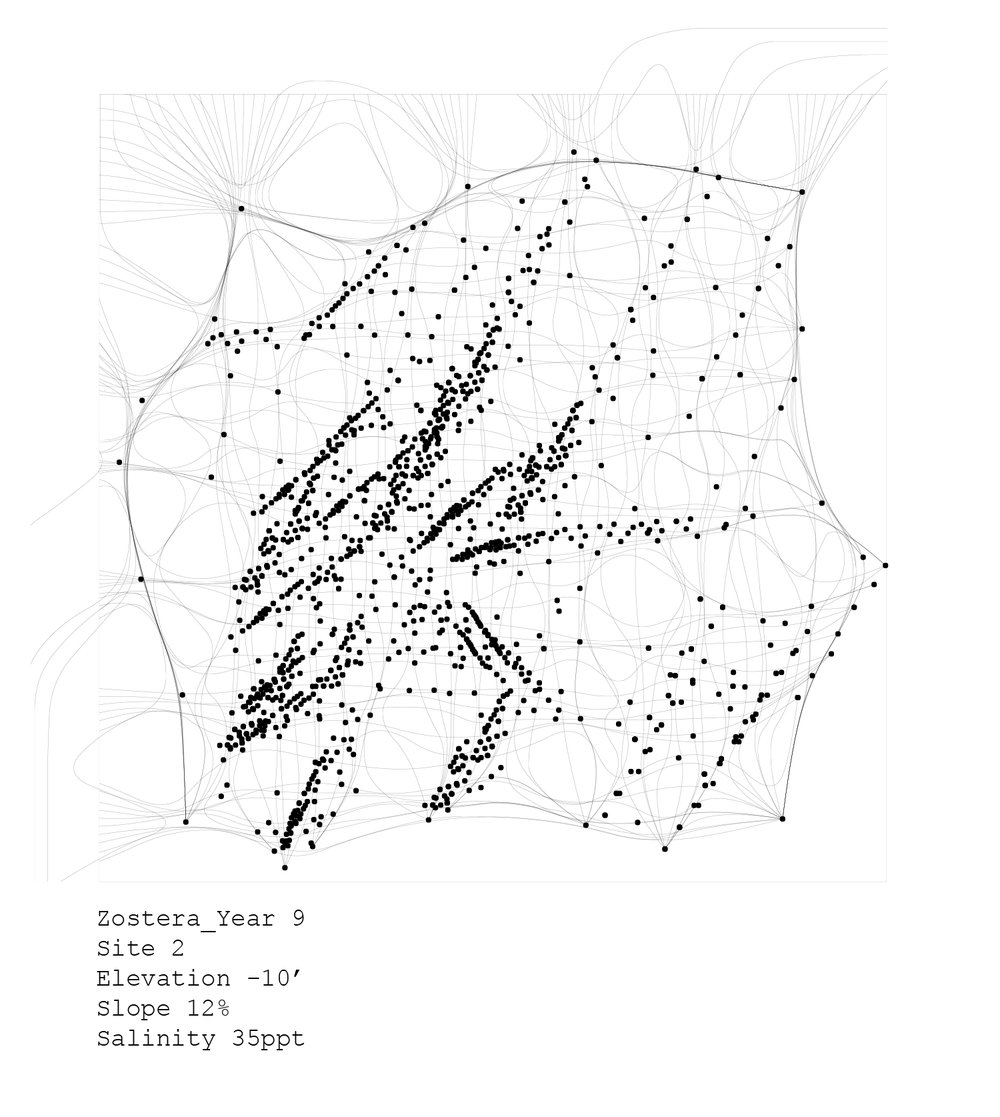 plants_analyses-06.jpg