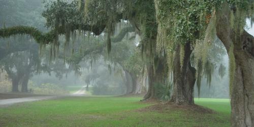 South Carolina Low Country Credit:  Legimin Sastro