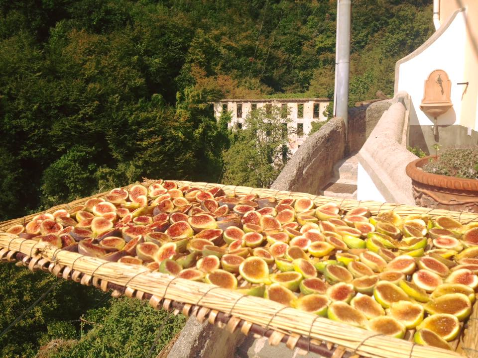 Drying figs in the southern Italy sun!