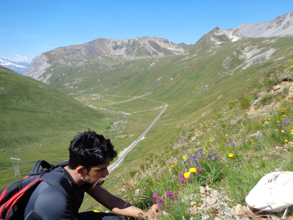 Alpine species seed collection on Stelvio Pass in Northern Italy (Photo by Malaka Wijayasinghe)