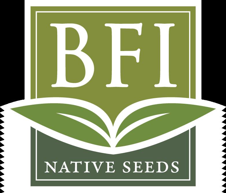 BFI.Border.Logo.Trans.png