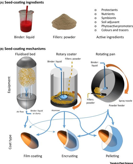 Key Figure: Seed-Coating Ingredients, Equipment, and Coat Type