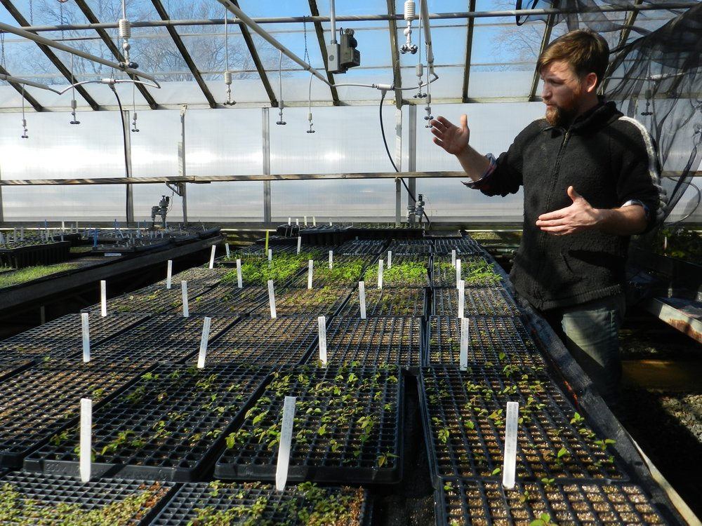 The nursery manager Jeremy LaPointe explaining the plant propagation process and showing the facilities.