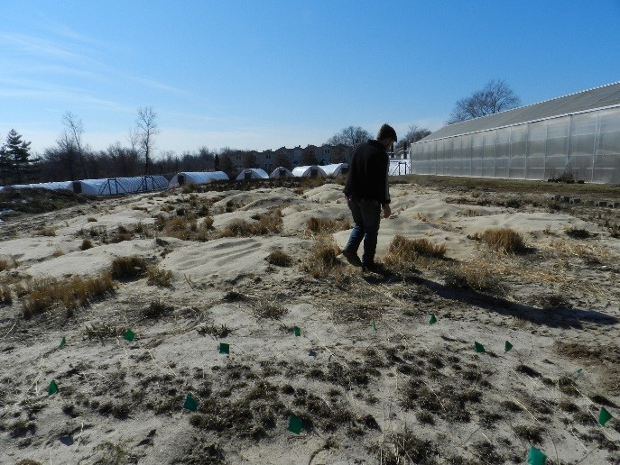 An artificial sand dune created at the Center to grow and propagate native psammophytes.