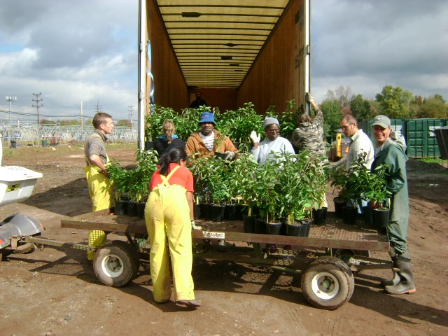 GNPC Staff loading plants of local genetic origin for delivery to a restoration site.