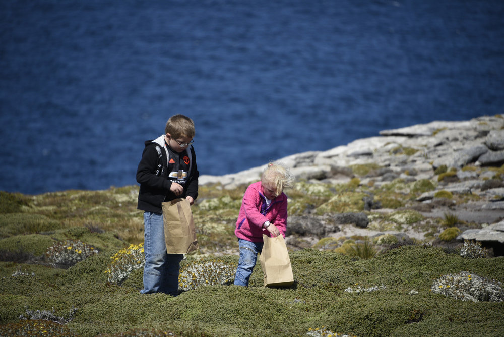 Collecting native plant seeds at Shallow Harbour Farm, West Falkland.  Photograph: Marlane Marsh