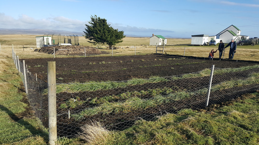 A small Native Seed Hub on Cape Dolphin Farm, East Falkland.  Photograph: Falklands Conservation.