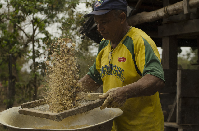 Processing Hymenaea courbaril seeds at the PA Dom Pedro - Photo_ Tui Anandi.jpg