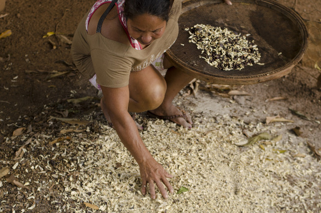 Processing native seeds at the Settlement - Photo_ Tui Anadi.jpg
