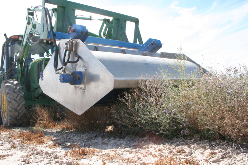 Figure 1. A standard Flail-Vac is set deep into the plant canopy of hoary tansyaster enabling the nylon brush to strip seed off of the plant. This technique both damages the plant, limiting the number of harvest, and accumulates significant amounts of vegetative material with the harvested seed. Photo by Derek Tilley.
