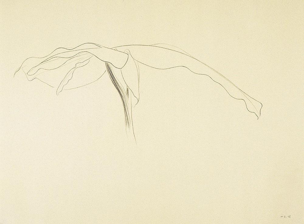 Alta Costura 2 1995. Graphite / paper, 50 x 70 cm