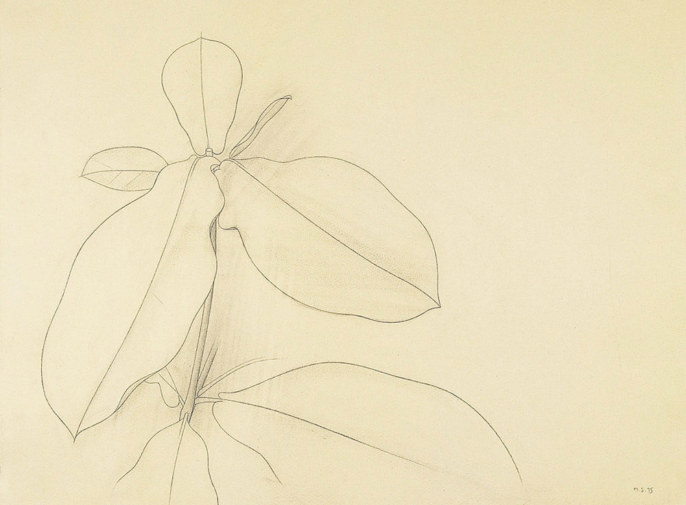 Morena 1995. Graphite / paper, 50 x 70 cm