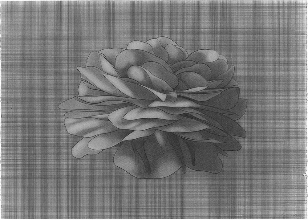 2B 2007.Graphite / paper, 50 x 70 cm