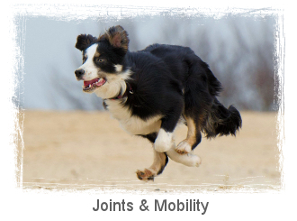 joints-and-mobility-section-link.jpg