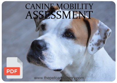 canine_assessment.png