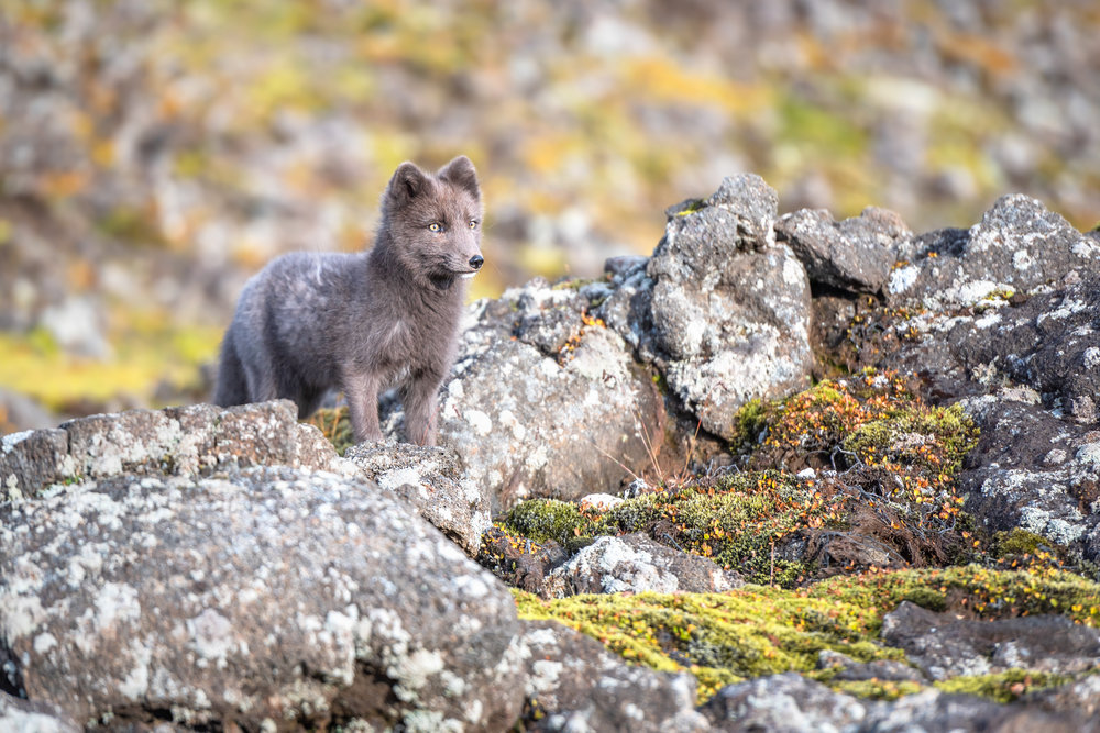 JamesRushforth_Portfolio6_AnimalKingdom02.jpg