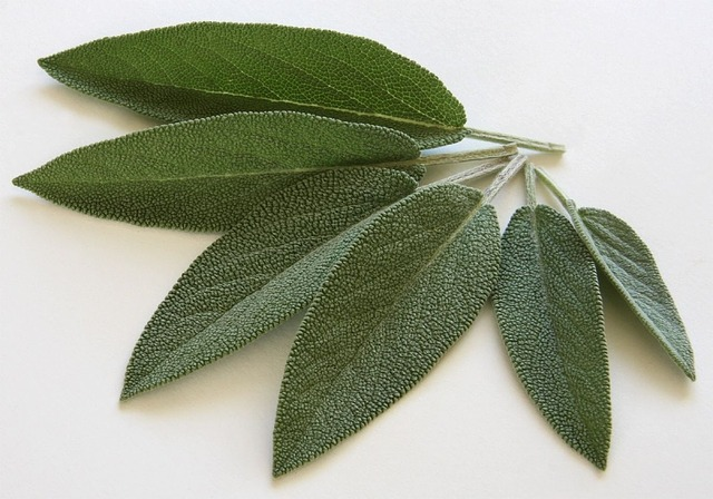 Benefits of sage